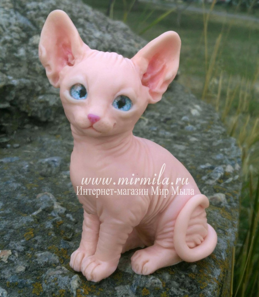 сфинкса котята фото